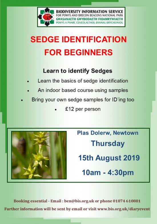 Sedges ID training day