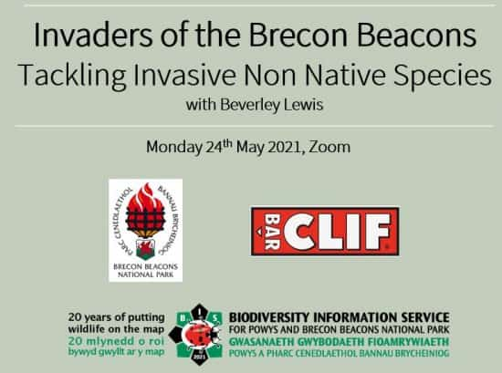 Tackling Invasive Species in the Brecon Beacons